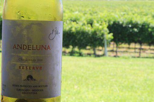 Andeluna Chardonnay Reserve - Tupungato, Mendoza