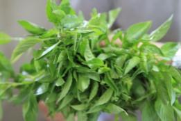 fresh herbs in Chiang Mai, Thailand
