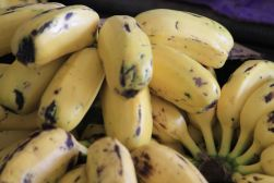 fresh bananas - New Caledonia, South Pacific