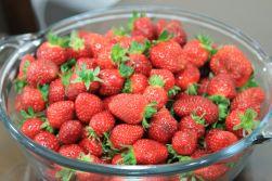 strawberries from Ricardo's Tomatoes - Port Macquarie, Australia