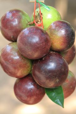 Mangosteens from Siem Reap, Cambodia